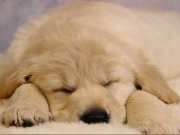 Since no one actually cares what Sandy Rosario looks like, I give you an image of a sleeping puppy.