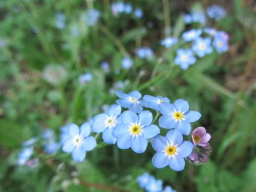 flower9 050613