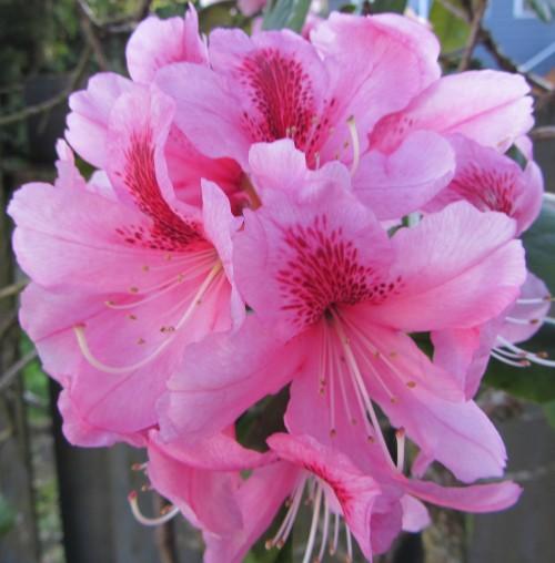flower8 060613