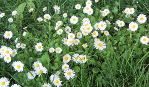 flower1 050613