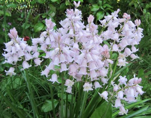 flower5 050613