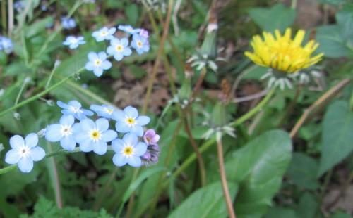 flower4 050613