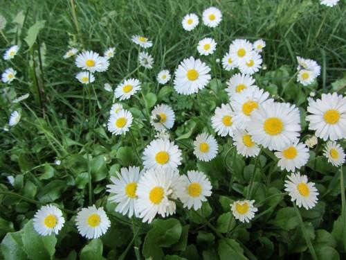 flower11 050613