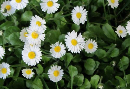 flower2 050613