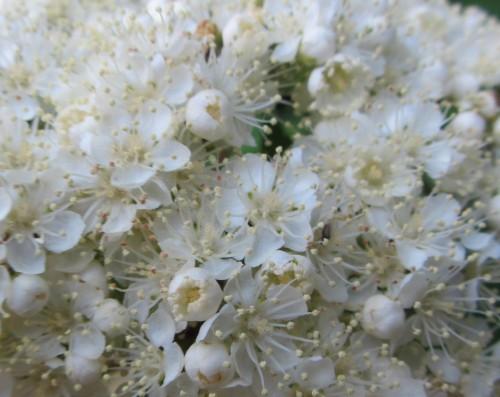 flower12 050613