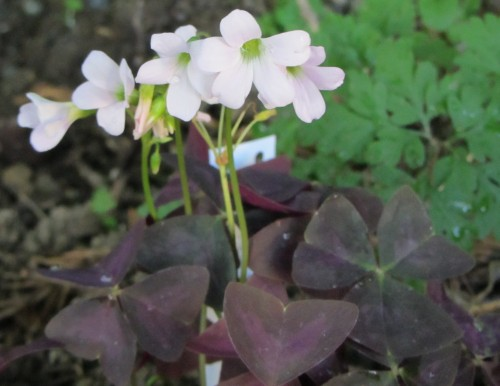 flower3 050613