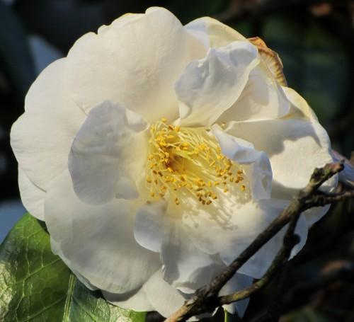flower14 050613
