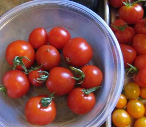 082913 extra tomato