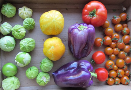 (L-R) Tomatillo, Lemon Cucumber, Sweet Tequila Pepper, (large) Siletz Tomato, (medium) Glacier Tomato, (small) Sun Gold Tomato