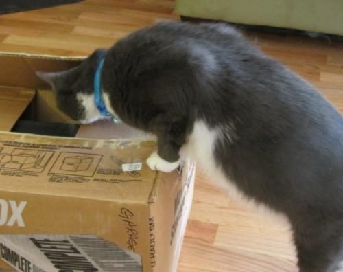 081713 boy cat