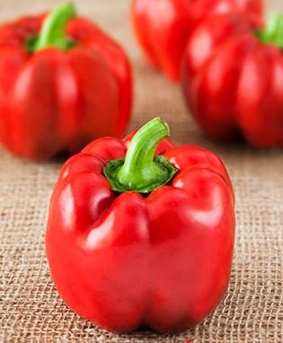 Sweet Pepper_Bell