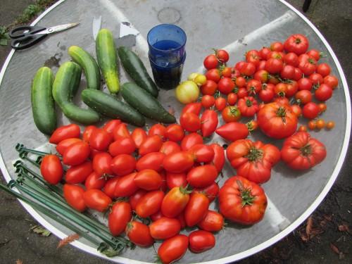 092213 harvest