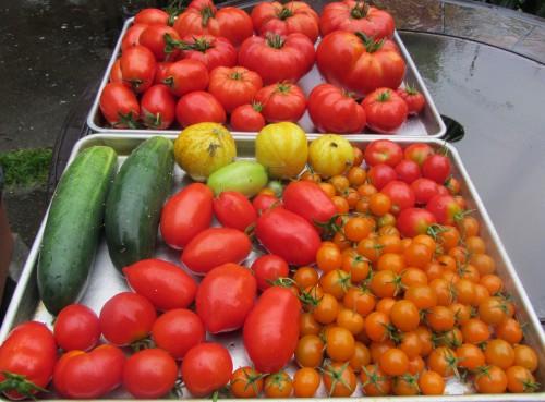harvest 091513
