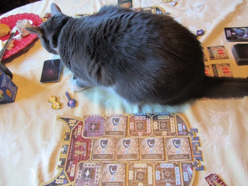 starship catan and boy cat