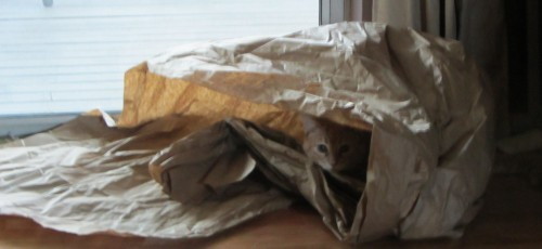 Everybody loves playing in packing paper