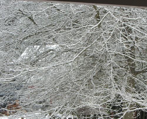 Cold oak.