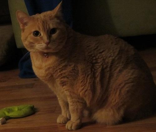 140428 girl cat
