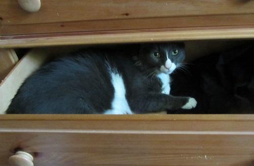 140621 boy cat