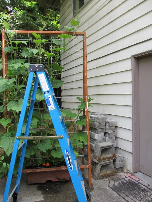 140607 trellis and ladder