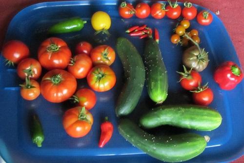 140814 harvest