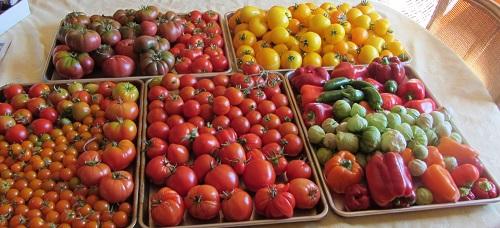 140914 harvest