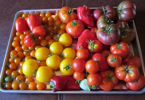 140909 harvest