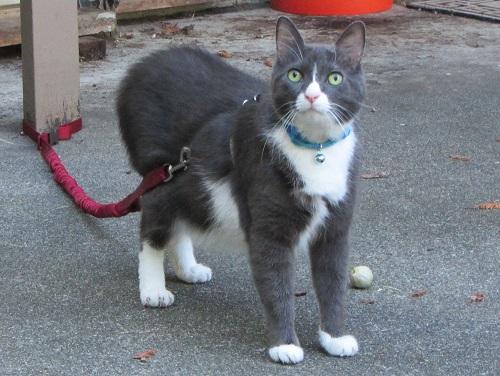 140914 boy cat