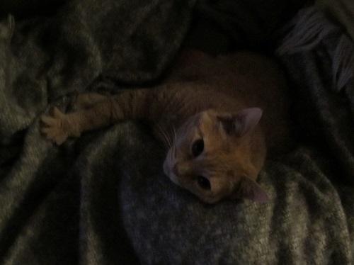 150225 girl cat