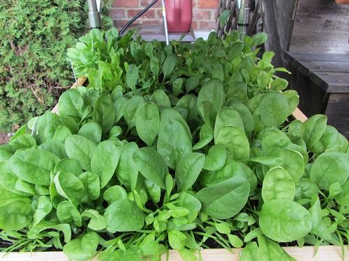 150829 salad table 2