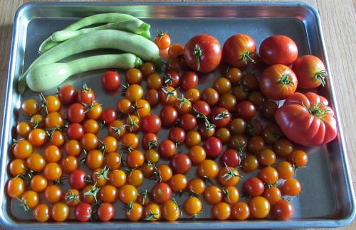 150824 harvest