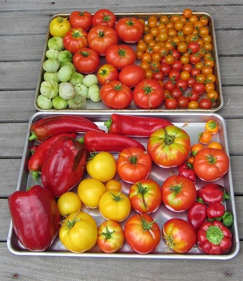 150815 harvest