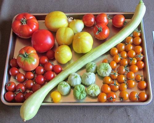 150807 harvest