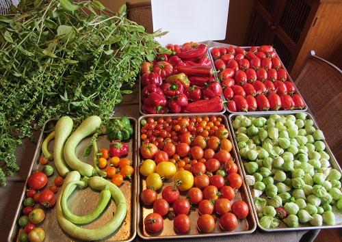 150829 harvest1