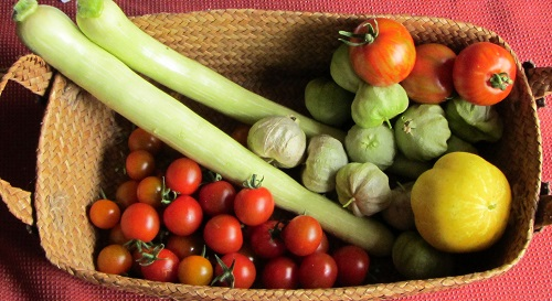 150805 harvest