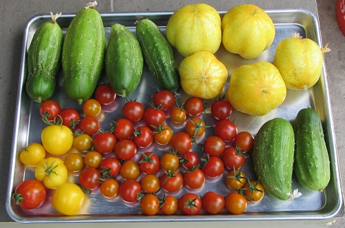 150802 harvest