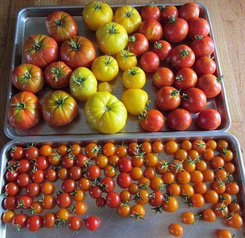 150827 harvest
