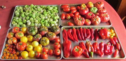 150913 harvest