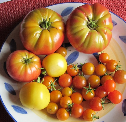 150918 harvest