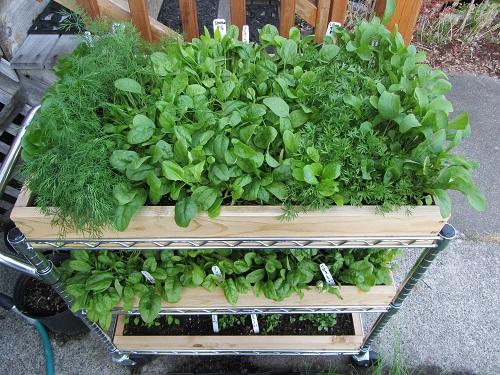 150909 salad table