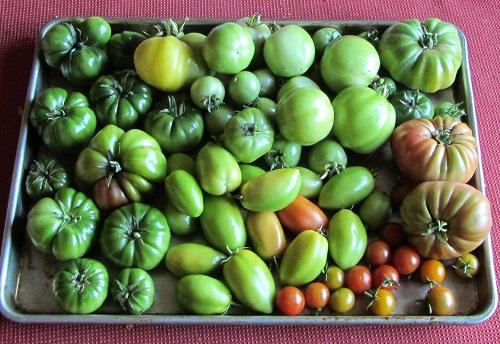 150928 harvest