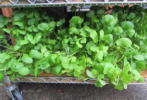 151031 salad table2
