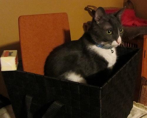 151227 boy cat