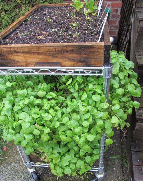 160309 salad table