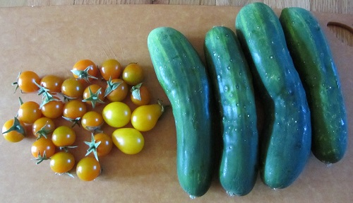 Sun Golds, Yellow Pear, and cucumbers.