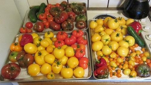 160905 tomatoes
