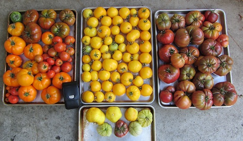 160915-harvest