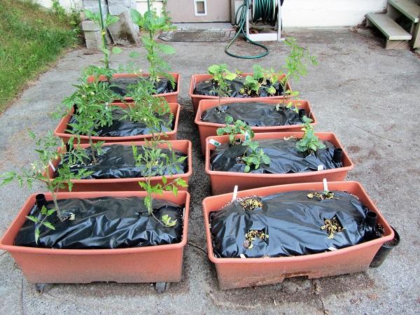 170529 plants