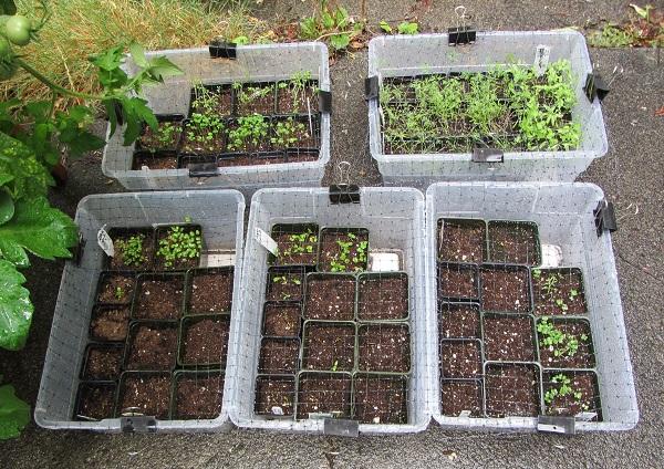 170813 seedlings
