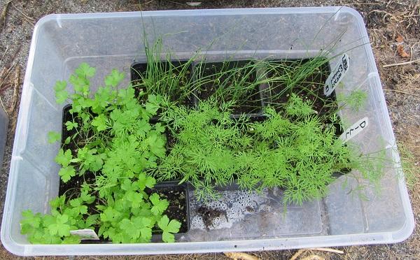 170820 seedlings 2