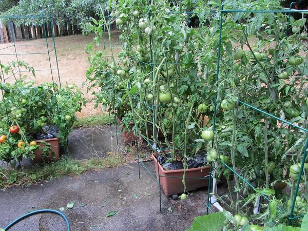 170813 tomato alley